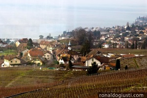 Vinhedos Suíça Francesa
